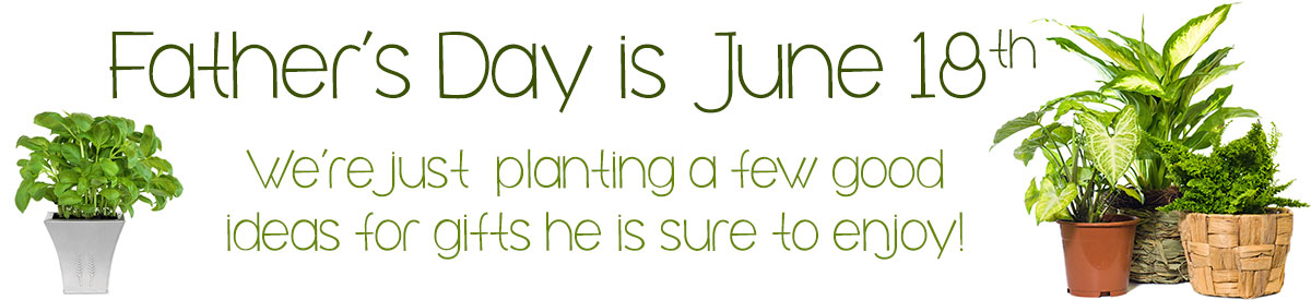 Father's Day is Sunday, June 18th! Celebrate his day with a lush plant, fruit or gourmet basket, or fresh flowers!