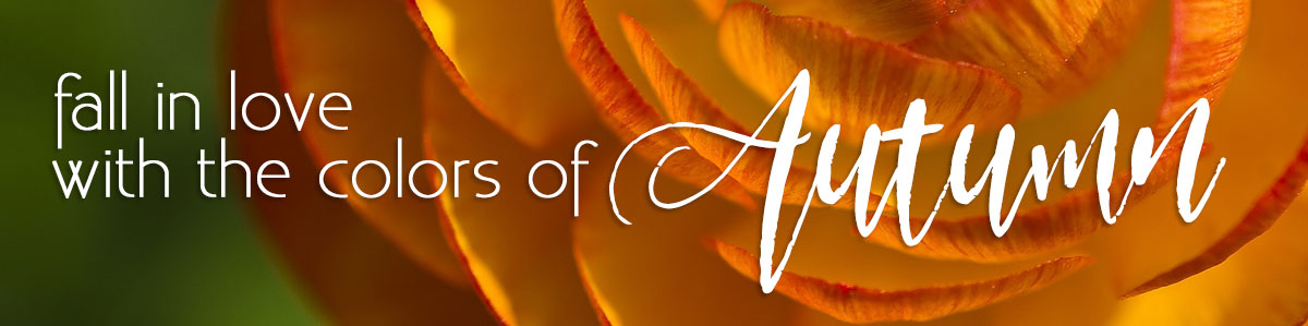 Fall in love with the colors of autumn - fresh autumn flowers, fall flowers, fall plants, and more