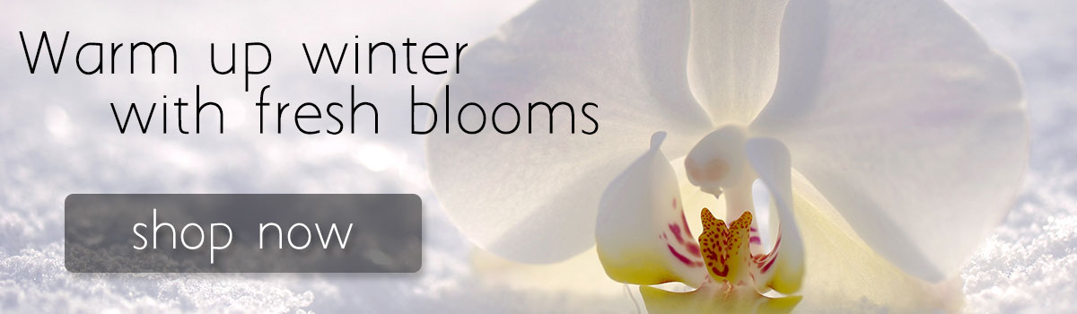 Warm up winter with gorgeous fresh flowers in winter white or a variety of bright and bold hues
